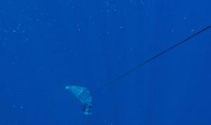 Plankton Sampling